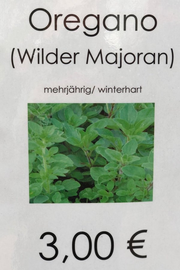 Oregano (Wilder Majoran)